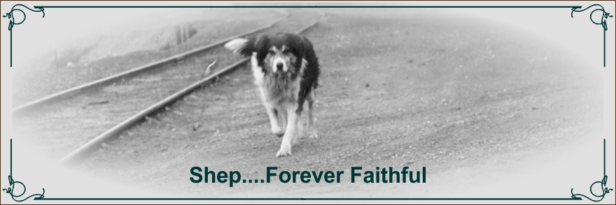 Shep Fort Benton Montana's faithful dog