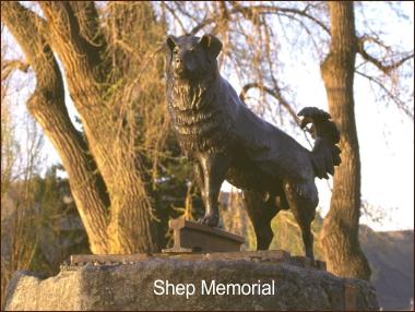 Shep's Memorial